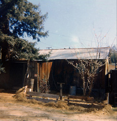 My cottage in Ben Lomond, California –1972